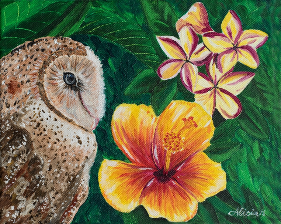 Hawaiian Owl